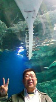 ノコギリ鮫と私